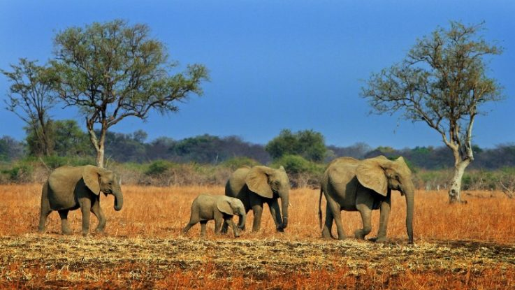 Five Wildlife Highlights in Zambia